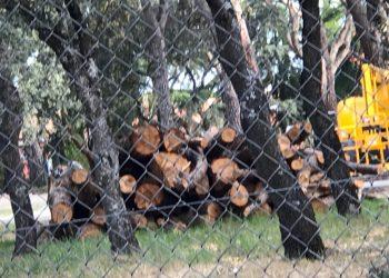 Vecinos de Majadahonda y Pozuelo de Alarcón alarmados por la tala de más de un centenar de árboles