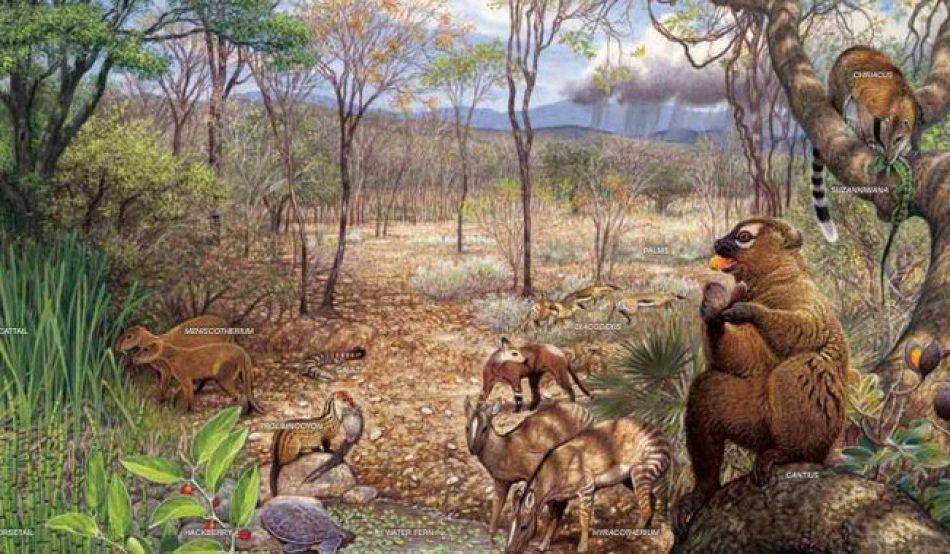 Describen la dinámica evolutiva de los mamíferos norteamericanos
