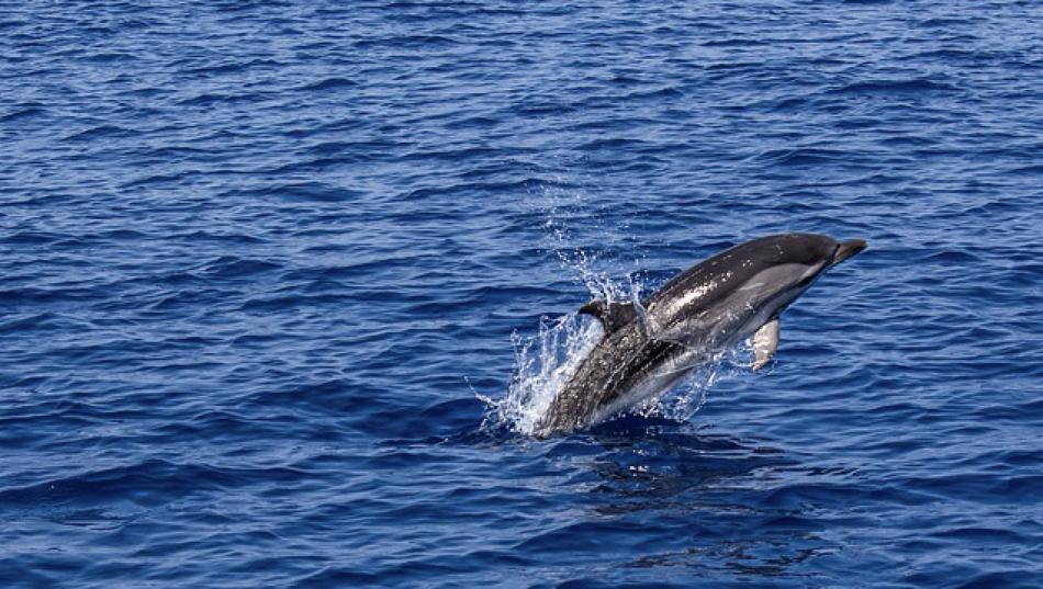 'Salvemos nuestros mares', un llamamiento para el Día Mundial de los Océanos