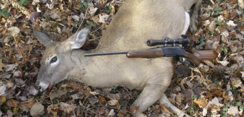 Ecologistas en Acción: «La propuesta de que los cazadores realicen el seguimiento de poblaciones cinegéticas tiene fines espurios»