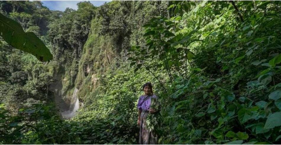 El aumento del cultivo de caña de azúcar pone en peligro la supervivencia de miles de familias en Centroamérica
