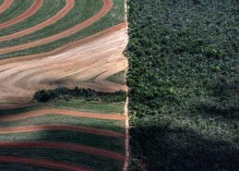 Las importaciones españolas de soja para la alimentación de ganado están detrás de la deforestación y la crisis climática