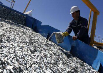 Carta abierta por la preocupante gestión de la sardina ibérica