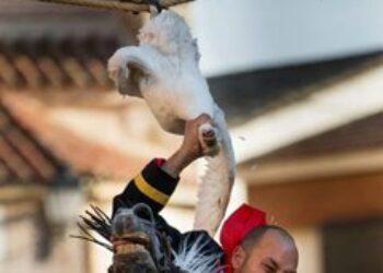 """La Tortura No Es Cultura y Animal Guardians denuncian la """"diversión"""" de decapitar gansos colgados boca abajo en Carpio de Tajo"""