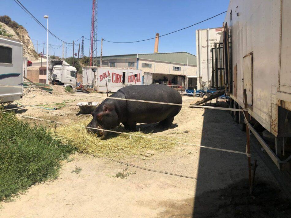 El circo Roma Dola y su nefasta actividad circense con animales