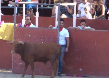 El Partido Animalista documenta las polémicas becerradas de El Espinar