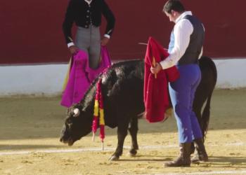 Vídeo revela espeluznantes bramidos de dolor de los becerros  durante becerrada en Alalpardo, Madrid