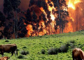 Los incendios forestales en España queman 53.119 hectáreas en lo que va de año, casi cinco veces más que en 2018