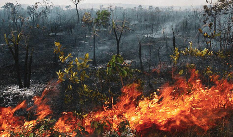 Brasil. Humo de incendios criminales en la Amazonía se propaga por todo el continente
