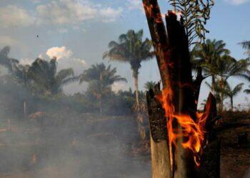 Brasil. Denuncian que en grupos de wasap hacendados coordinaron prender fuego a la Amazonia / Apoyaban así a Bolsonaro