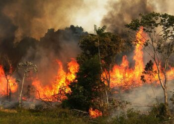 Fridays for Future lanza un llamamiento para proteger la selva amazónica: 23 de agosto