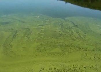 Amigos da Terra alerta da contaminación por cianobacterias no encoro das Conchas