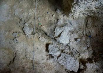Hallan restos de madera usados por neandertales hace unos 60.000 años