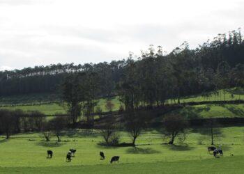 Global Nature aplaude que el informe del IPCC ponga el foco en la relación directa entre cambio climático y degradación del suelo