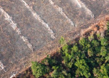 El freno a la deforestación y la reducción del consumo de carne, medidas imprescindibles contra la crisis climática y de biodiversidad