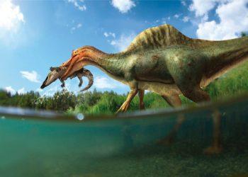 'Vallibonavenatrix', el primer dinosaurio espinosáurido de la península ibérica