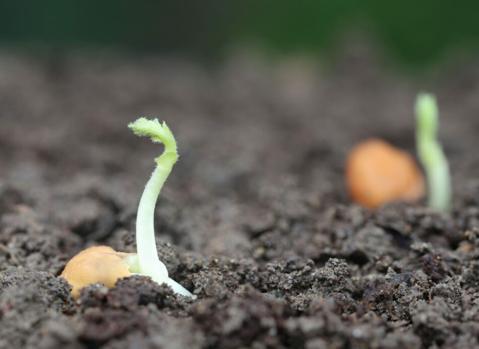 La Fundación Global Nature denuncia que el futuro de la agricultura pasa por la adaptación a retos como el cambio climático y a nuevos hábitos de consumo