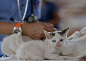 Compromís promoverá cambios en la legislación estatal para que incluya a los veterinarios como centros sanitarios