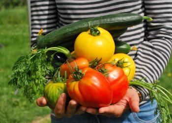 """Amigos da Terra pon en marcha o proxecto """"Cultivo biointensivo de alimentos: método agroecolóxico innovador para a adaptación ao cambio climático de hortas familiares e comunitarias""""."""