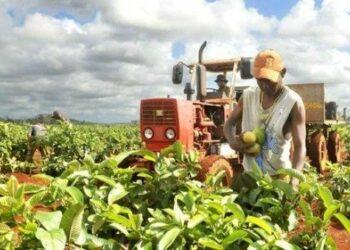 Cuba denuncia freno agrícola por bloqueo impuesto por EE.UU.