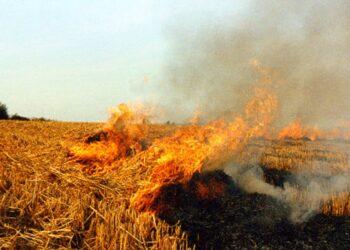 Ecologistas extremeños denuncian episodios de contaminación causados por la quema de rastrojos