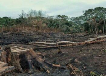 Bolivia. Confirman control total de incendios en la Chiquitanía