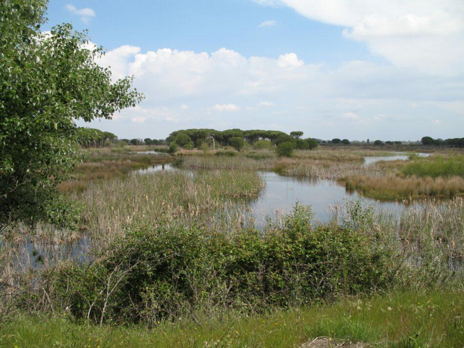 Salvemos Doñana plantea las amenazas que se ciernen Doñana sobre a los nuevos representantes de la Comisión Europea y del Parlamento Europeo