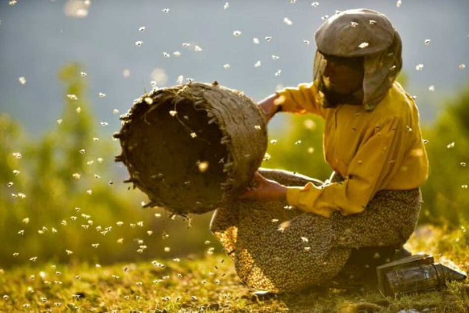 La Espiga Verde de la SEMINCI premia, por segundo año, la película con valores medioambientales