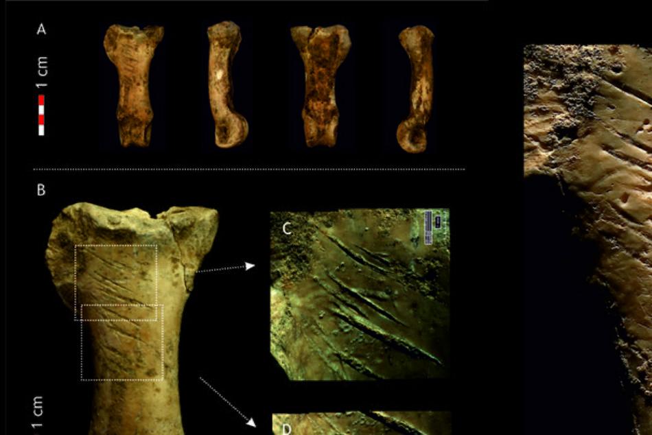 Encuentran el último collar de los neandertales, hecho de garras de águila