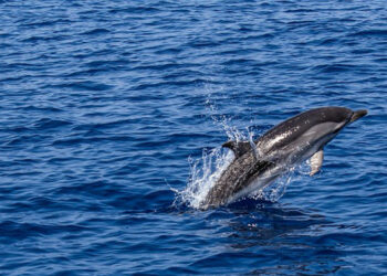 220.000 firmas para salvar nuestros mares
