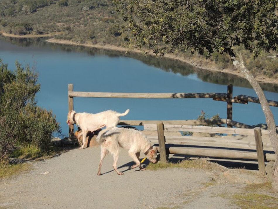 La Junta de Extremadura no responde a requerimientos del defensor del pueblo por el uso de rehalas en el Parque Nacional de Monfragüe