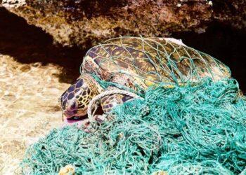 Cada año se abandonan 640.000 toneladas de redes de pesca en los océanos