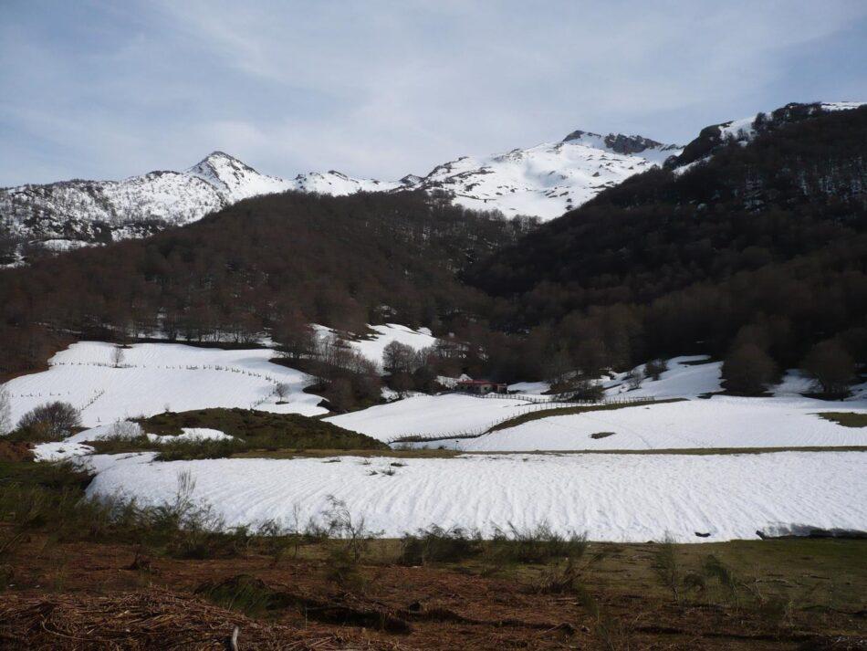 Coordinadora Ecoloxista d'Asturies: «tememos por la suerte de la osezna Saba liberada en Picos de Europa»