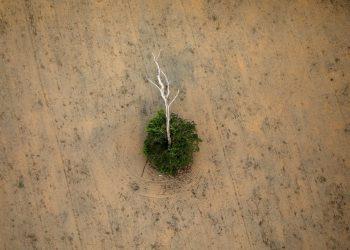 Alertan de que la Amazonía está en un «punto de inflexión» y puede convertirse en una sabana