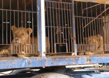 Ecologistas en Acción: «Viva el circo, pero sin animales»