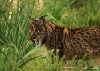 La defensa de la biodiversidad será la campaña confederal de Ecologistas en Acción en 2020