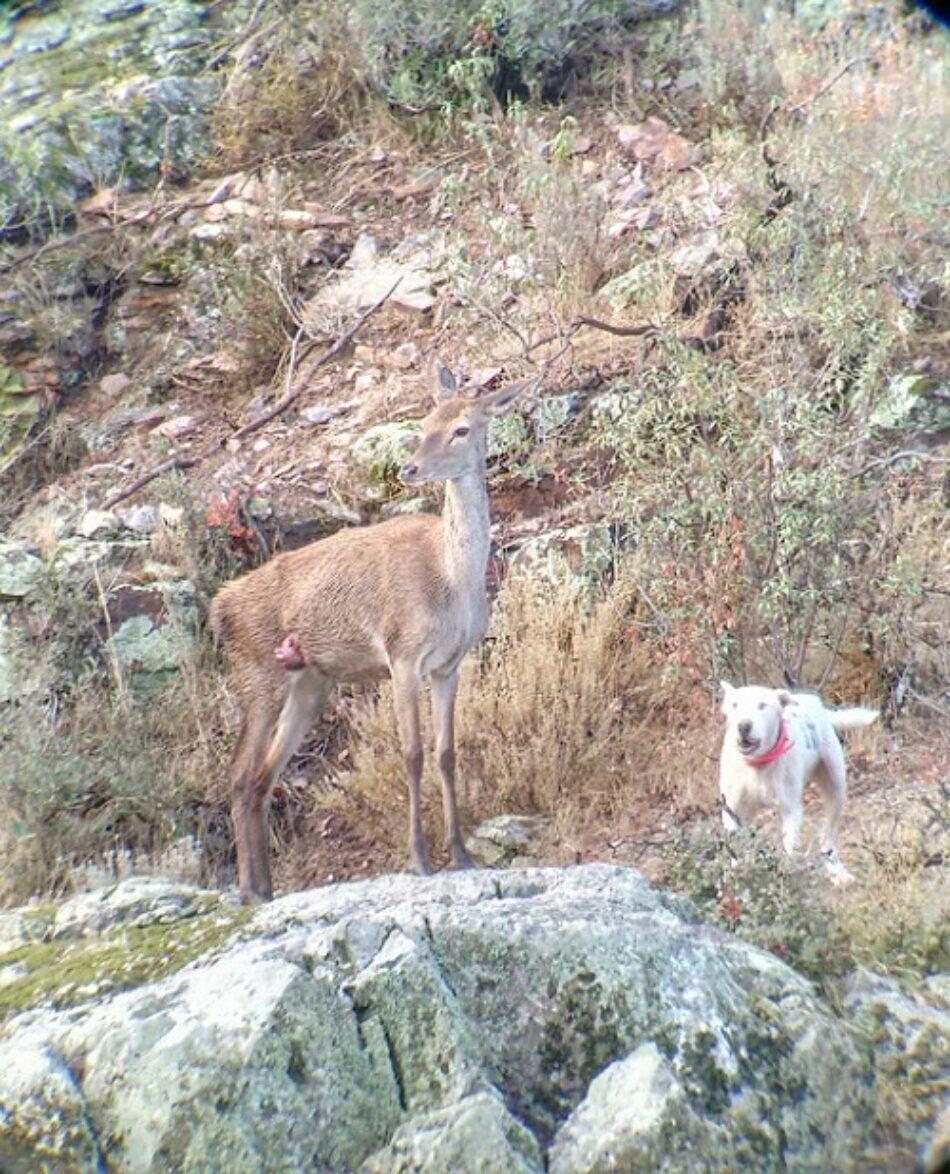 Ecologistas Extremadura solicita que se haga público el calendario de Monterías para reducir conflictos de las actividades de turismo de naturaleza con la caza