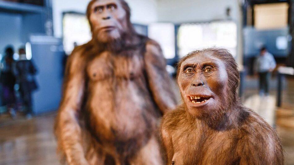 Los últimos 'Homo erectus' vivieron en Indonesia hace 117.000 años