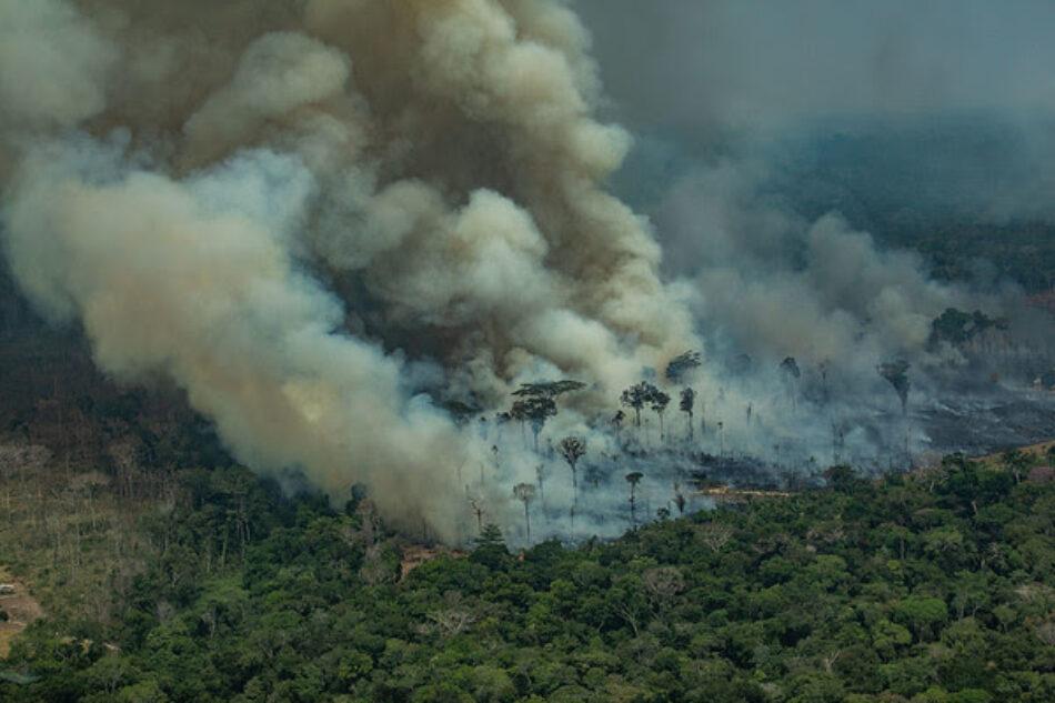 2019: El año en el que los grandes incendios forestales han evidenciado la emergencia climática