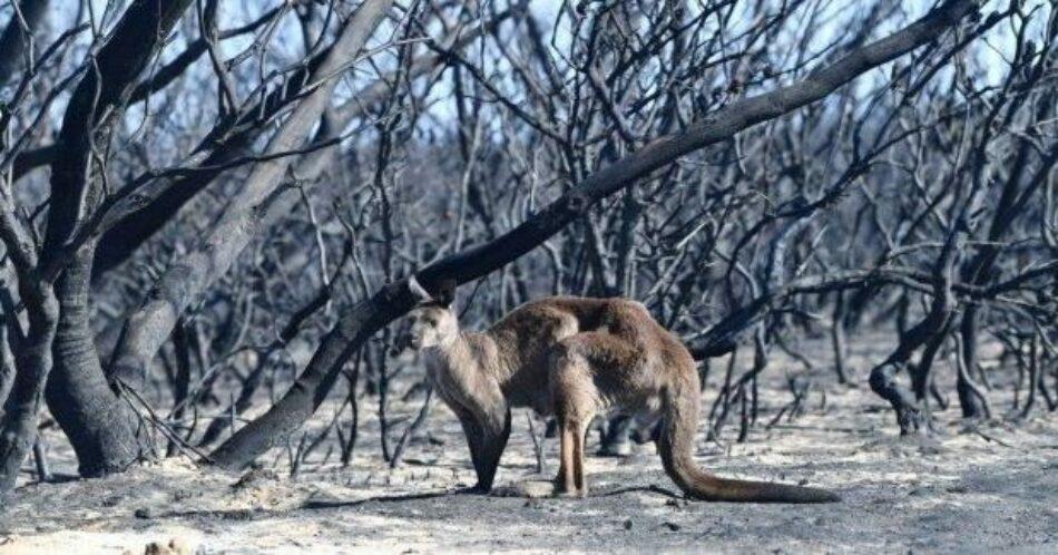 """Australia. Discurso del líder del Sindicato Unido de Bomberos: """"Al final de la manguera contraincendios no te encuentras con escépticos del cambio climático"""""""