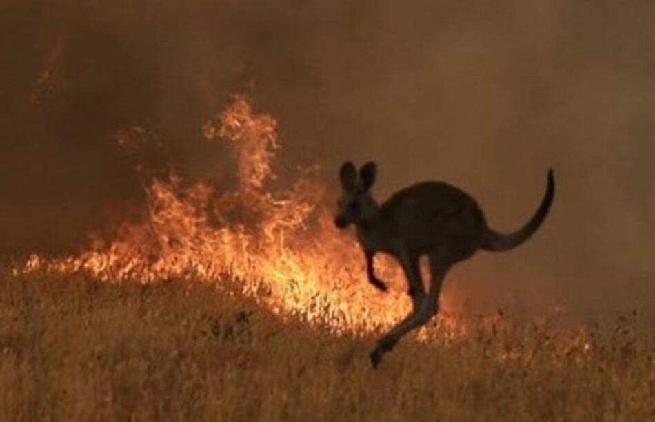 Australia. Más de 10 millones de hectáreas devastadas por las llamas