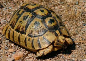 Activistas de Ecologistas en Acción sancionados por un proyecto de devolución de tortugas moras a su hábitat natural