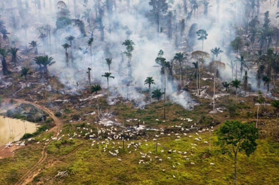 """Destrucción del medio ambiente. """"El cambio climático es el síntoma pero la enfermedad es el capitalismo"""""""