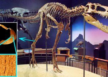 Los tiranosaurios enanos no existieron, eran sus hijos