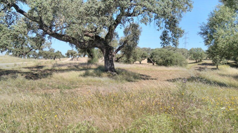 EQUO VERDES reafirma su confianza en el presente y el futuro del campo en Andalucía