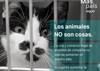 EQUO y Más País preguntan al Gobierno qué medidas va adoptar contra la cría y el comercio ilegal de animales de compañía