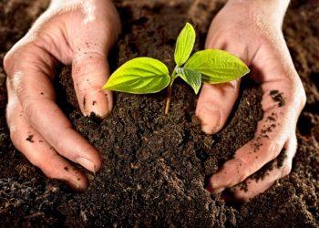Amigos de la Tierra apuesta por el compostaje para la creación de empleo