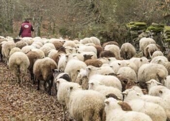 Amigos de la Tierra reclama una política agraria que apueste por un consumo y producción  de menos carne y mejor carne