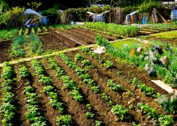 La movilidad a huertos de autoconsumo o explotaciones agrarias no profesionales será posible con la duración indispensable en Extremadura
