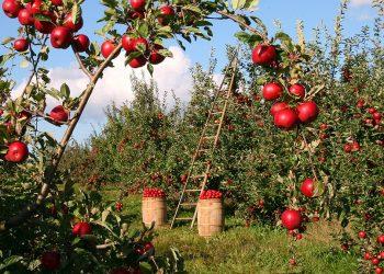 Amigos da Terra reivindica a importancia do sector agrario e gandeiro en tempos de urxencia sanitaria polo COVID-19